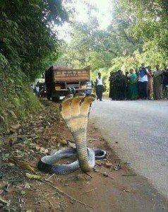 serpent-a-3tetes1-238x300